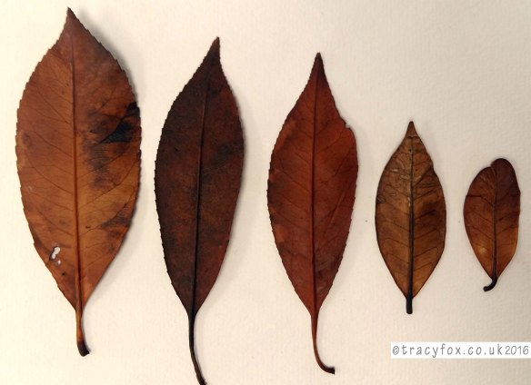 2016 June 06 Preserving Leaves Results3 t r a c y f o x